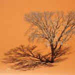 Namibia (Namibië)