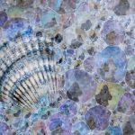 zeeschuim